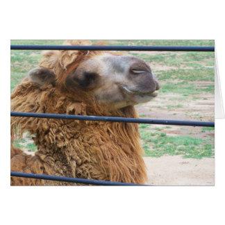 carte de voeux de sourire de chameau !