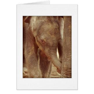 Carte de voeux de veau d'éléphant