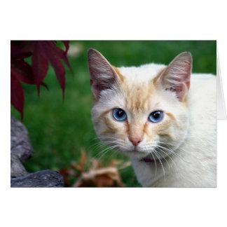 Carte de voeux de visage de chat siamois
