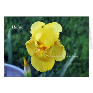 """Carte de voeux d'iris de Choctaw de """"Halito"""""""