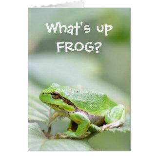 Carte de voeux drôle de grenouille