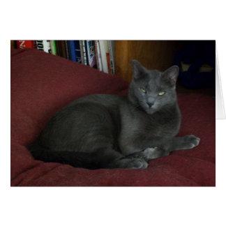 Carte de voeux féline bleue russe - Mlle Lola