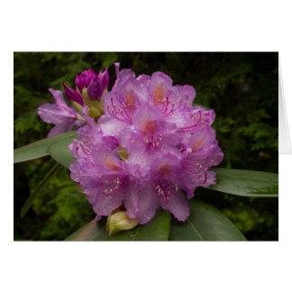 Carte de voeux, fleur pourpre de rhododendron