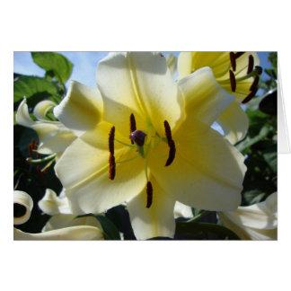 Carte de voeux jaune de blanc de lis