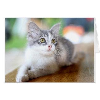 Carte de voeux personnelle mignonne de chaton gris