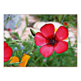 Carte de voeux rouge de fleur sauvage