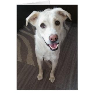 Carte de voeux souriante de chien - masquez à