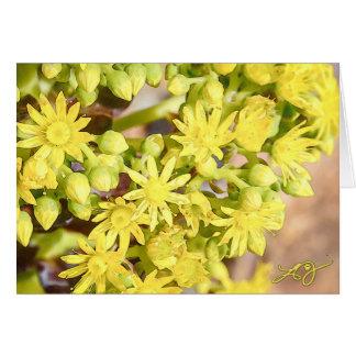 Carte de voeux vierge avec les fleurs succulentes