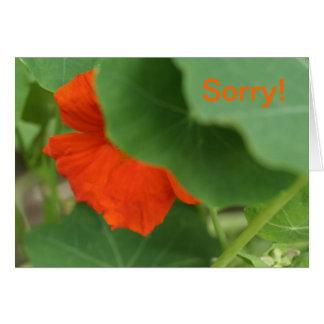 Carte Désolé