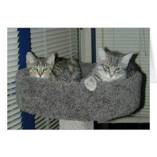Carte Deux chats dans le logement de minou