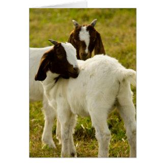 Carte Deux chèvres