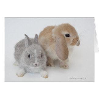 Carte Deux lapins. Nain et la Hollande Lop. de
