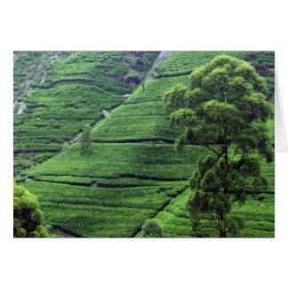 Carte Domaine de thé, secteur de Kandy, Sri Lanka
