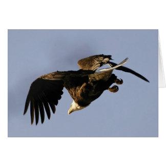 Carte Eagle chauve