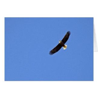 Carte Eagle chauve américain