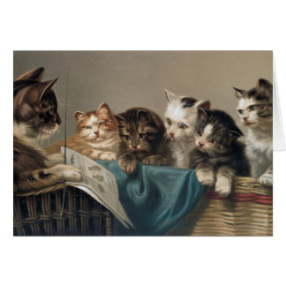 CARTE ÉCOLE DE CAT