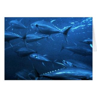 Carte École de thon de truite saumonnée