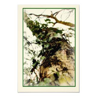 carte écru photo floue nature arbre tronc lierre
