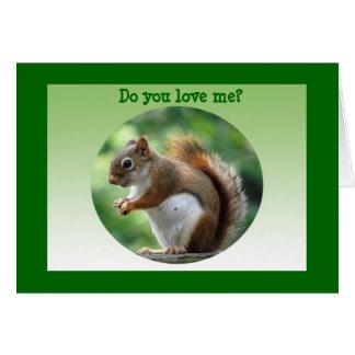 Carte Écureuil rouge