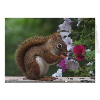 Carte Écureuil rouge et pétunias