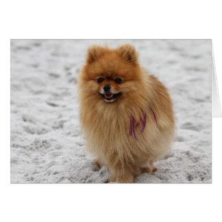 Carte Edgrrrr #2 - Pomeranian