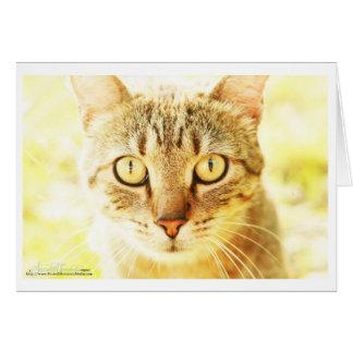 Carte EL Gato