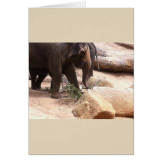 Carte Éléphants de Melbourne