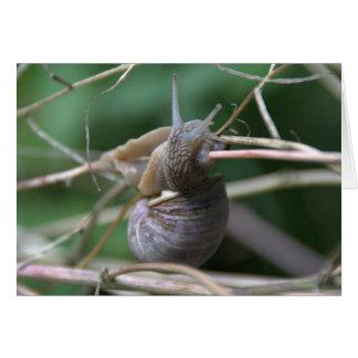 Carte Escargot