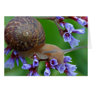 Carte Escargot et fleurs