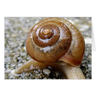 Carte Escargot Shell