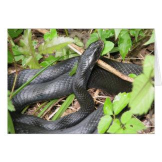 Carte Exposer au soleil de serpent de coureur noir