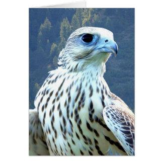 Carte Faucon blanc