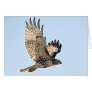 Carte Faucon coupé la queue par rouge en vol