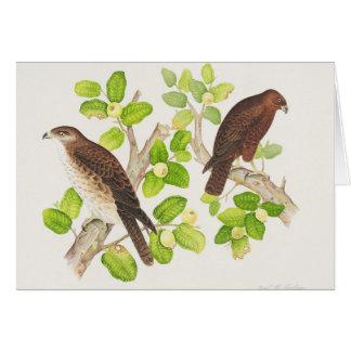 Carte Faucon hawaïen