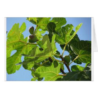 Carte Figues sur des branches d'arbre