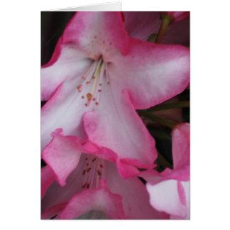 Carte Fin de fleur de rhododendron