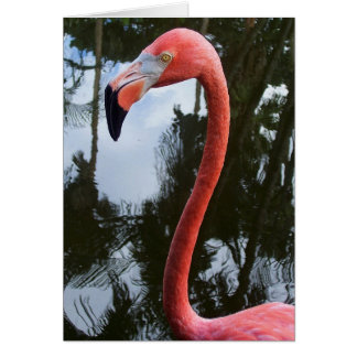 Carte Flamant rose