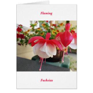 Carte Flamber Fuschias
