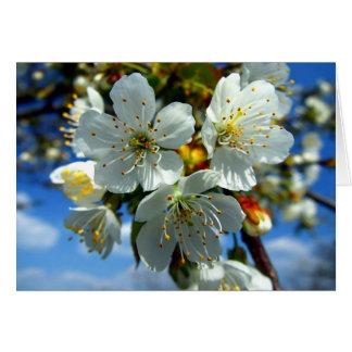 Carte Fleur blanche de pomme
