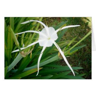Carte Fleur blanche de vrille des Fidji
