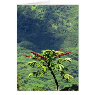 Carte Fleur d'arbre de parapluie