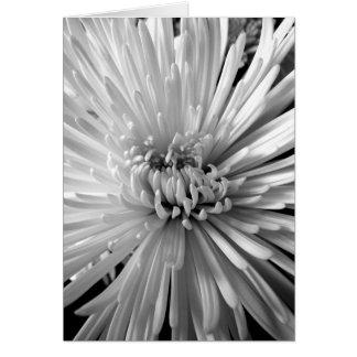 Carte Fleur de chrysanthème