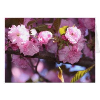 Carte Fleur de floraison
