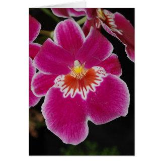 Carte Fleur de floraison d'orchidée de pensée d'eros de