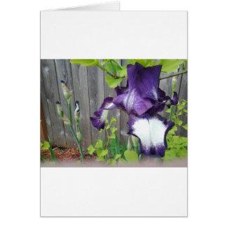 Carte Fleur et bourgeons d'iris