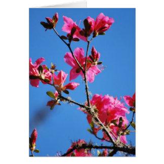 Carte Fleur et signification d'azalée