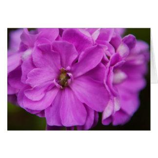 Carte Fleur fuchsia