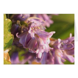 Carte fleur lilas