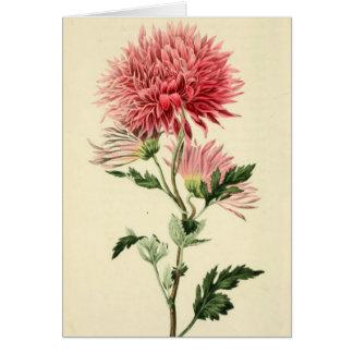 Carte Fleur rose vintage de chrysanthème
