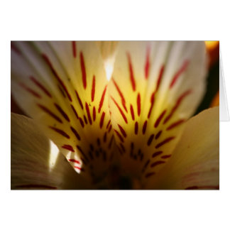 Carte Fleur vibrante